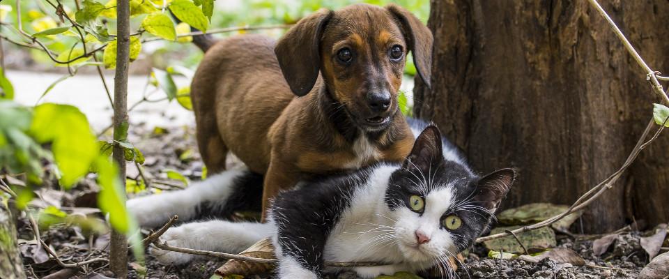 Nicht wie Hund und Katz